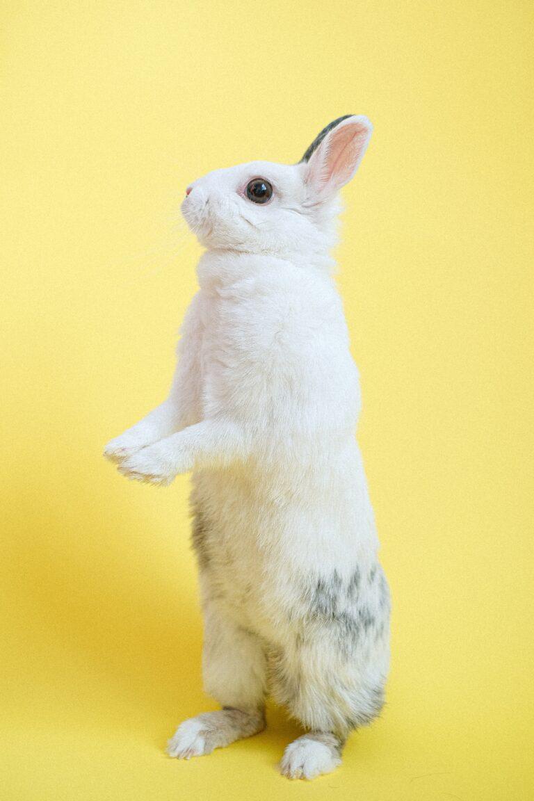 Dieta królika, czyli jak prawidłowo karmić