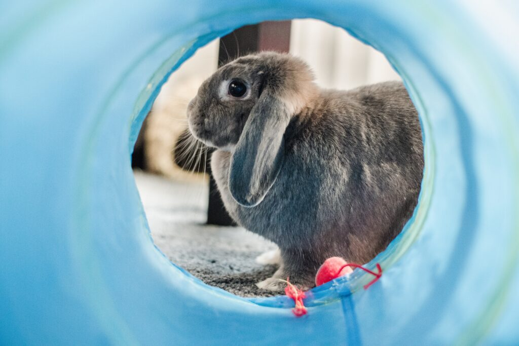 FAQ, Czyli wszystko co musisz wiedzieć o królikach